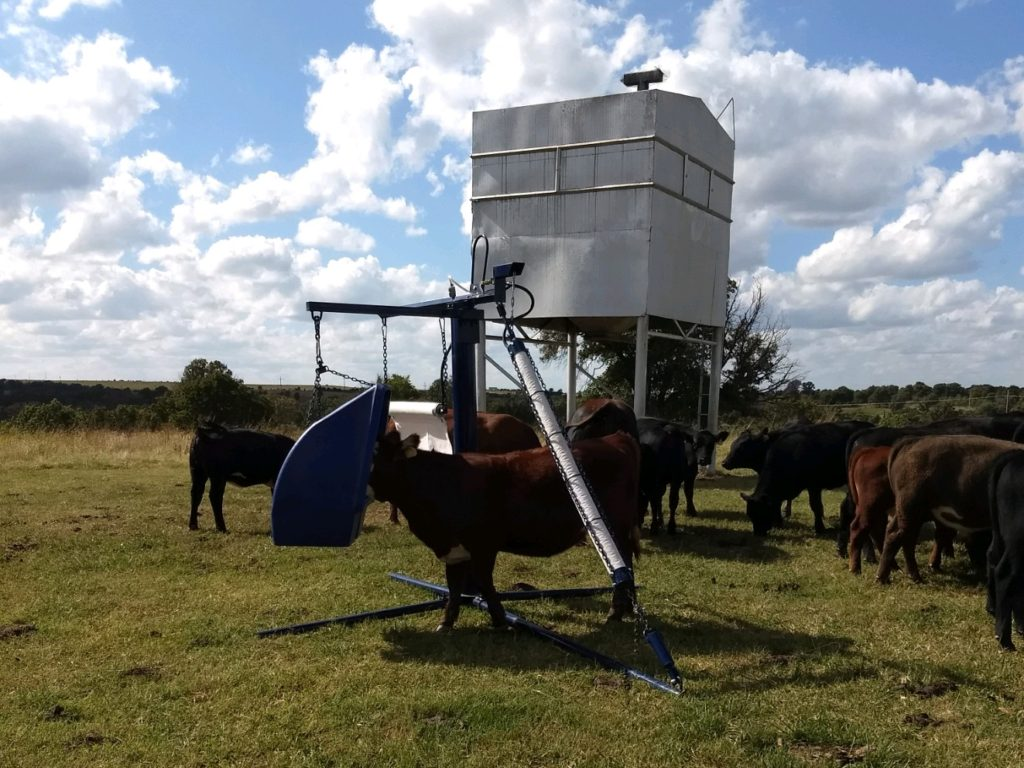 Lewis Cattle Oiler With Feeder In Use Near Feeder